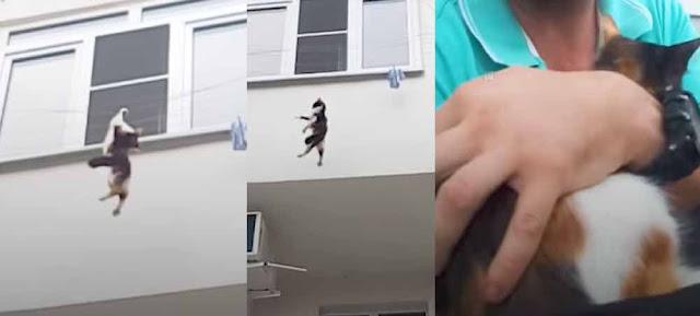 Мужчина из мести к бывшей девушке выкинул из окна ее кота