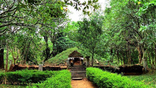 තුරුලතා වලින් වටවූ - කඳාල රජමහා විහාරය 🌿☸️🙏🌳 (Kandala Rajamaha Viharaya) - Your Choice Way
