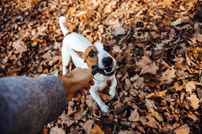 Dlaczego trzeba sprzątać po swoim psie?