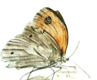 British Wildlife Watercolours