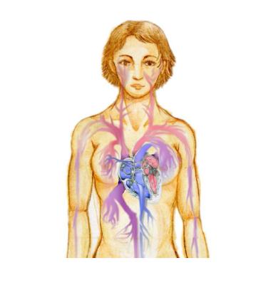 Sistem kardiovaskular