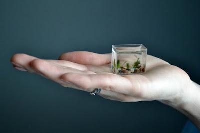 Το μικρότερο ενυδρείο στον κόσμο