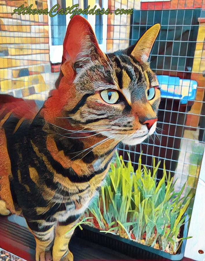 colourful cat art using PicsArt app
