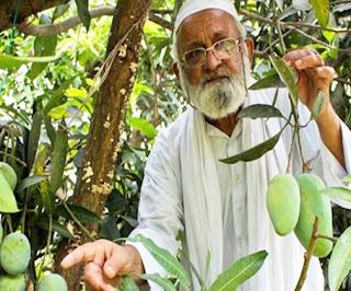 Haji Kalimullah Khan Mango