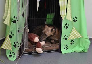 http://www.scoobymascotes.com/2017/06/mi-perro-tiene-miedo-los-petardos-y-las.html