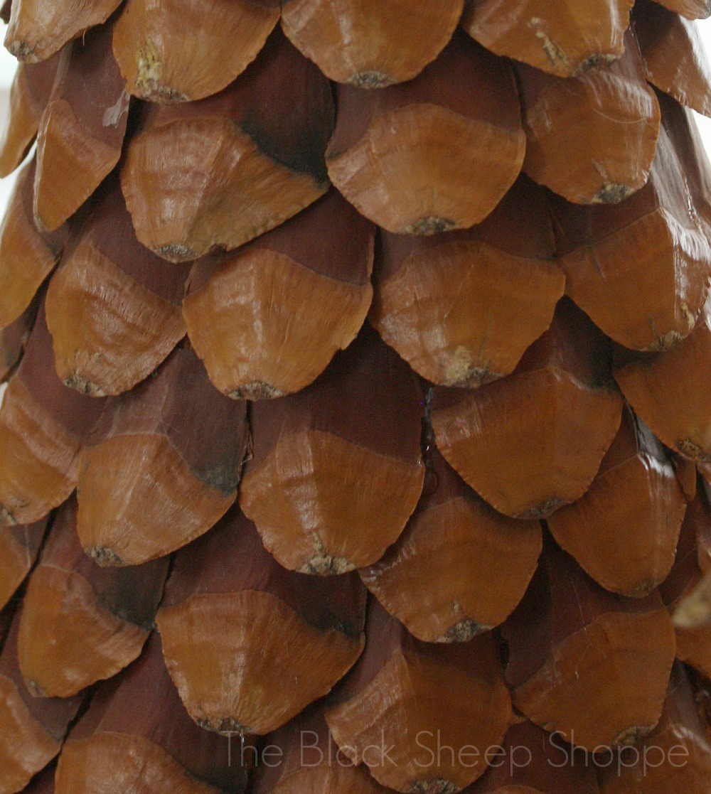 Overlapped pine cone scales