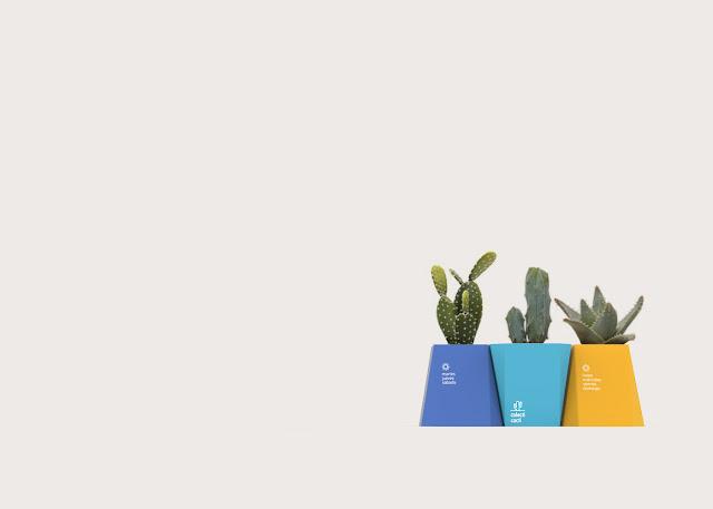 chau-hoa-de-ban-colecti-cacti
