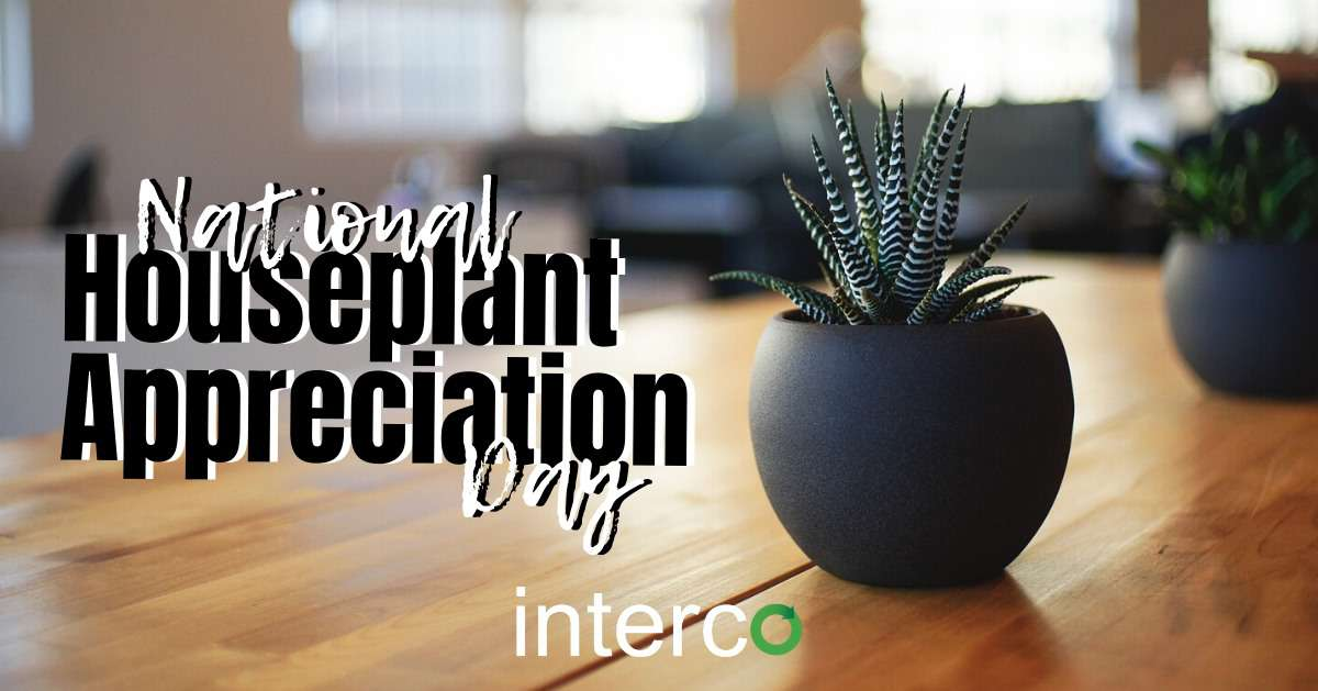 National Houseplant Appreciation Day Wishes Images