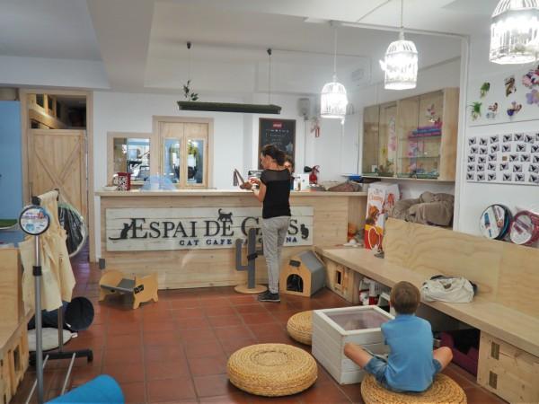 espai de gats barcelona cat café