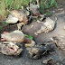 Масовий мор риби та качок в київських ставках стався через ртуть - сайт Дніпровського району