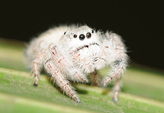http://www.katasaya.net/2016/06/makhluk-mengerikan-hidup-dalam-tubuh-manusia.html