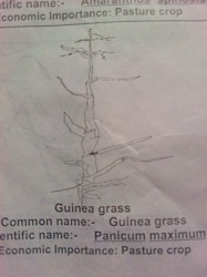 Weeds And Their Botanical Names Known As Scientific Name Fabioclass