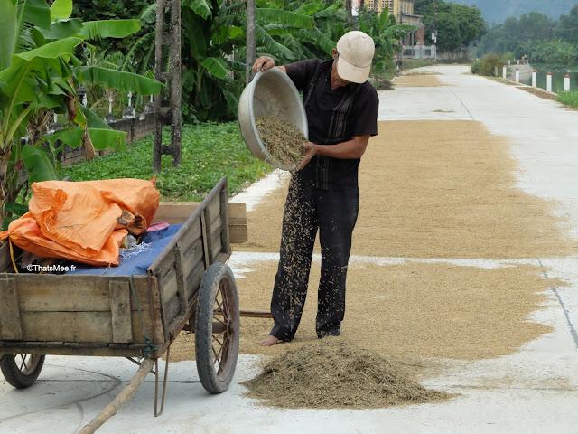 reserve van long ninh binh vietnam campagne tri riz paysan village