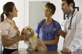 artrite em cães pequenos