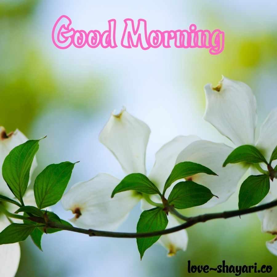 good morning flowers photos