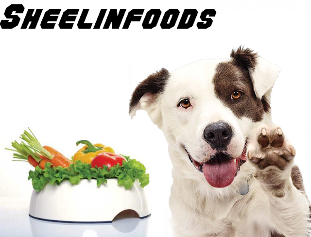 natural balance vegan dog food {All Info}
