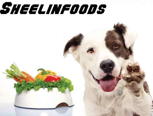 post natural balance vegan dog food {All Info}