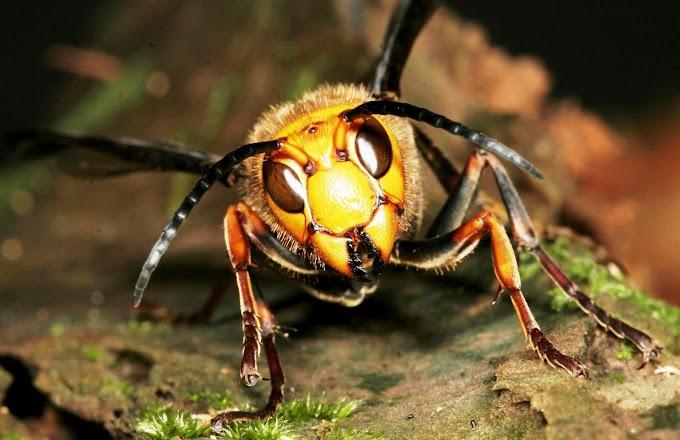 کورونا وائرس کے بعد جان لیوا مکھیوں کا خطرہ، ماہرین نے نیا انکشاف کردیا