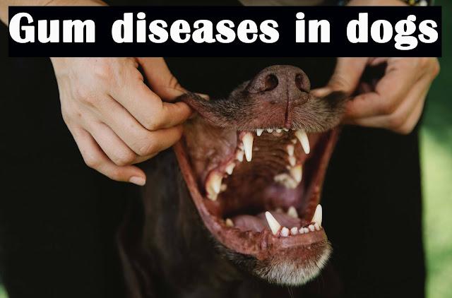 Gum diseases in dogs