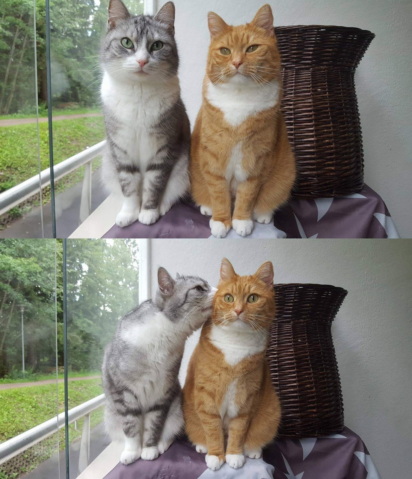 Funny cats - part 280, cute cat picture, funny cat image