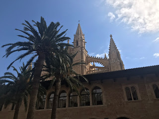 palm trees in front of palma cathedral