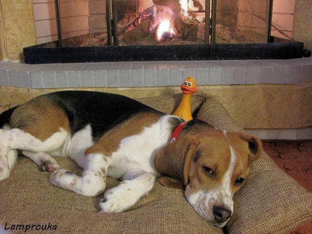 Οδηγίες για να φτιάξεις κρεβατάκι σκύλου από παλιά μαξιλάρια.