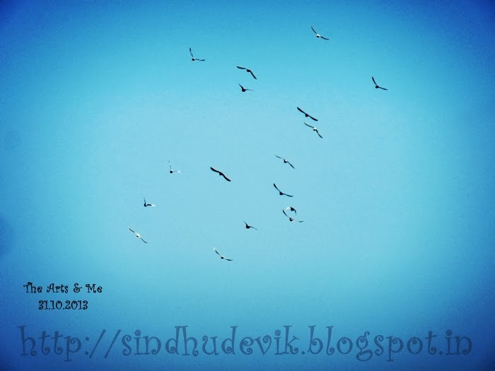 Bird Watching - birds' day over! Leaving for home now!
