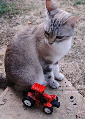 Gato y tractor