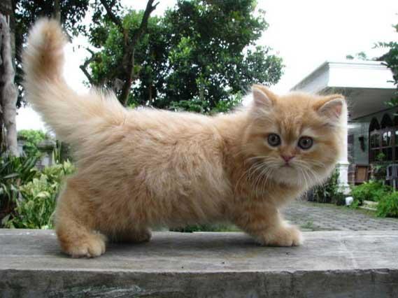 Cara Mengatasi Kucing Yang Baru Pindah Atau Adopsi Agar Bisa Jinak
