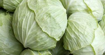 Kandungan Gizi dan Manfaat Bunga Kol untuk kesehatan