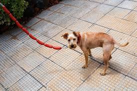 Atar perro longaniza