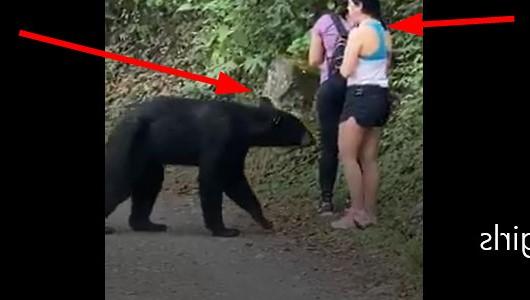 ثلاث فتيات تواجه دب أسود في نزهة  bearvsgirls