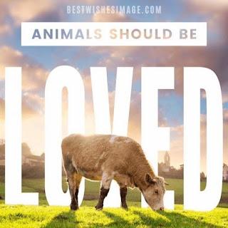 animal day best wishes