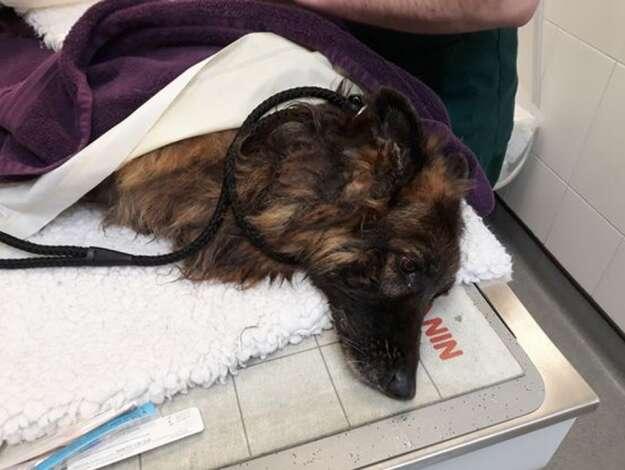 Crueldade: Cadela tem pedra amarrada no pescoço e é jogada em rio para morrer