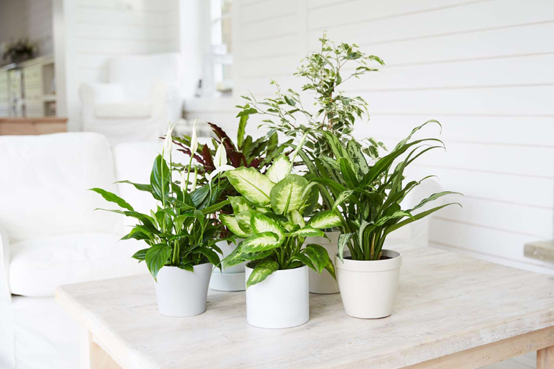 8 Easy-Care Houseplants That Improve Air Quality