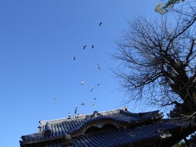 佐太天神宮 拝殿 鳩