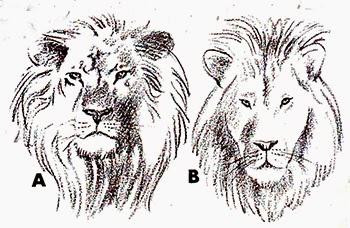 86 Gambar Arsiran Singa