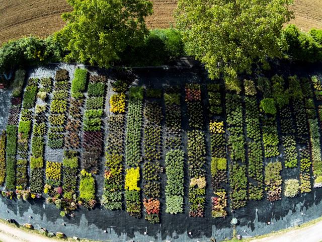 plantas vivaces, viveros, cultivo de plantas, viverismo, paisajismo