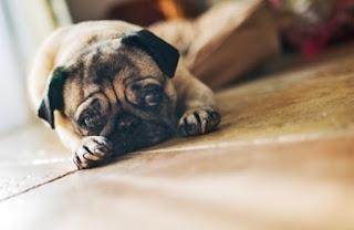 Ο σκύλος σου στεναχωριέται μαζί σου!
