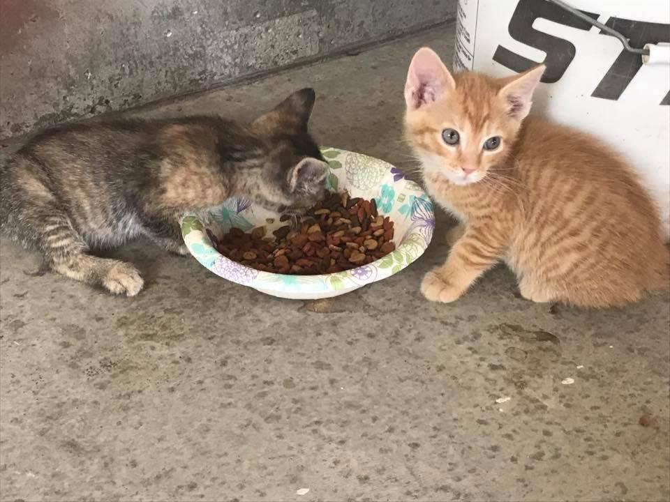 Anak kucing makan