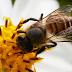 Madurasa Fitkidz: Manfaat Kandungan Sari Phyllanthi Untuk Kesehatan Anak