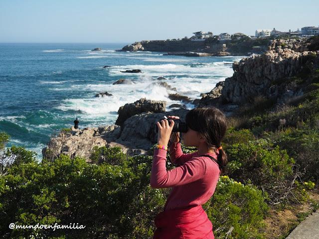 Buscando ballenas en Hermanus