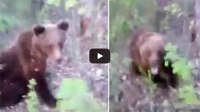 http://obutecodanet.ig.com.br/index.php/2019/07/16/homem-encontra-urso-na-floresta-chuta-o-e-filma-tudo-veja/