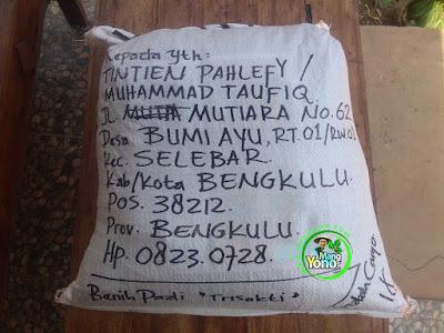 Benih pesana MUHAMMAD TAUFIQ Bengkulu  (Sesudah Packing)