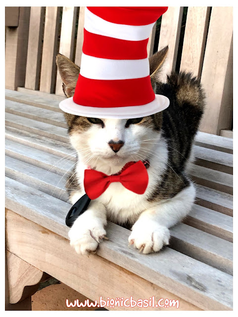 Basil The Cat In The Hat ©BionicBasil® The Pet Parade 342