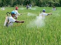 azimat untuk menolak hama tanaman