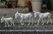 http://2.bp.blogspot.com/-aSspBZzx0Mw/U4TJk3azOCI/AAAAAAAADj4/pGXge60A6Qc/s1600/Donkey+Family.JPG