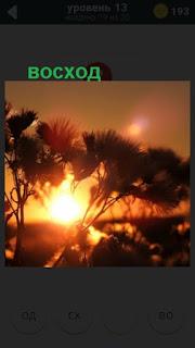 начинается восход солнца на 13 уровне в игре 470 слов