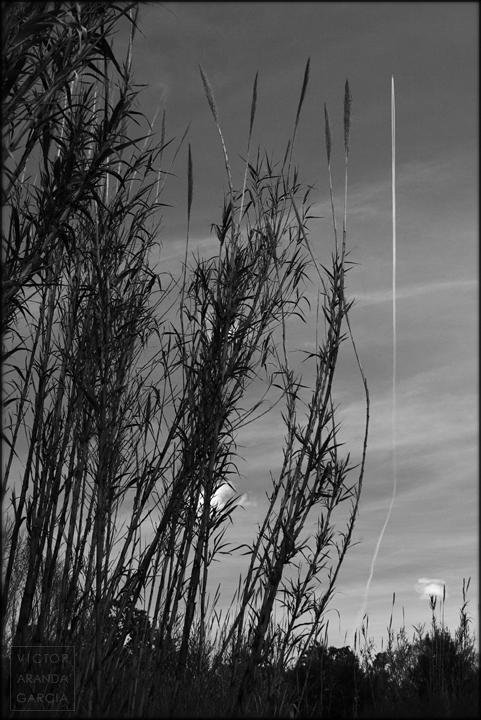 fotografia,naturaleza,limites,estela,avion,cañas,valencia