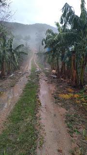 Reunião da ABAVAR sobre os prejuízos causados pela chuva e granizo aos Bananicultores neste 30/05